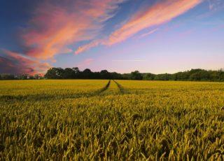Agricoltura sostenibile: l'Italia è ancora troppo indietro
