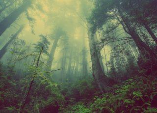 Giornata internazionale delle foreste: un modo per salvarle esiste