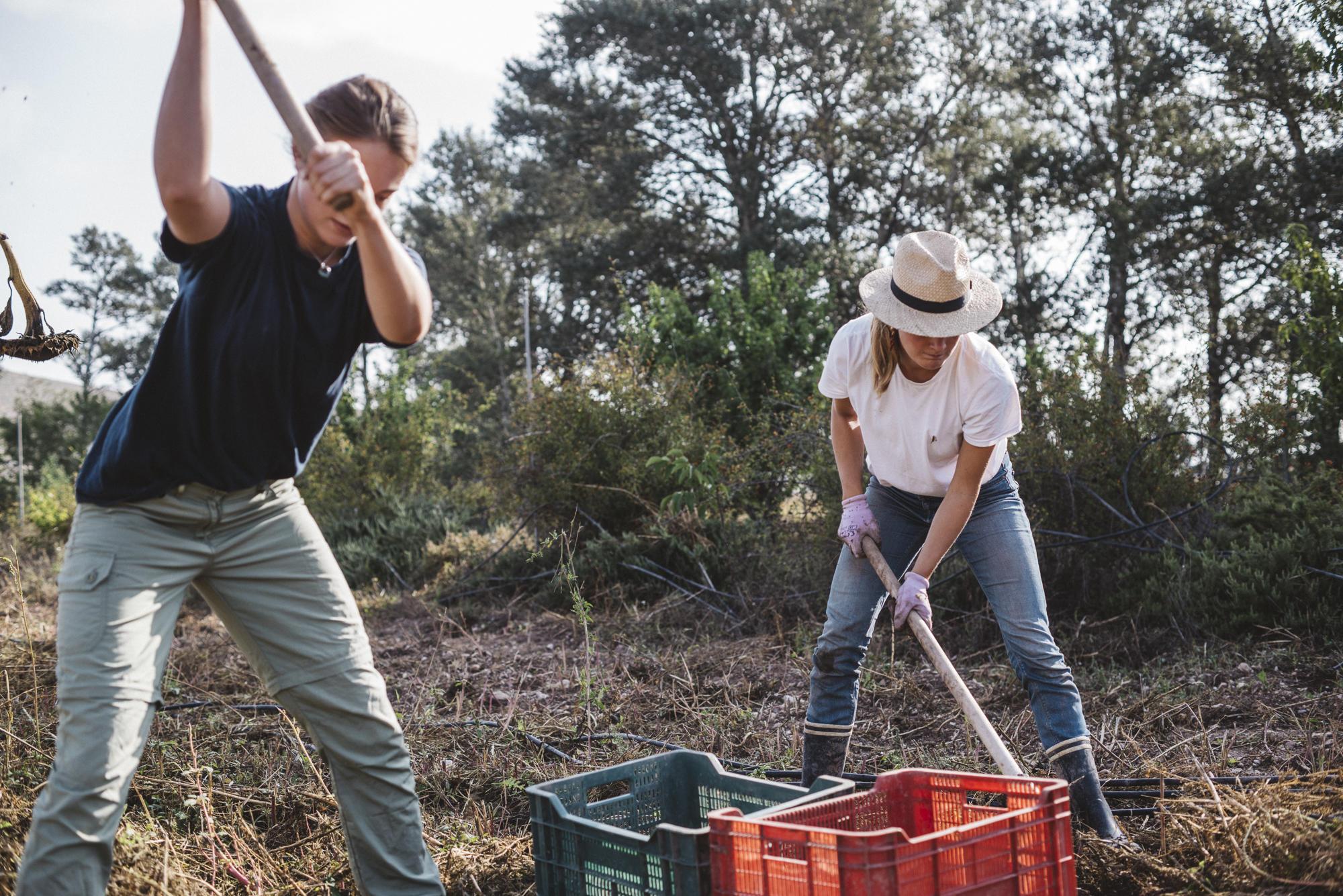 Prodotti dell'agricoltura organica: Patagonia e la rigenerazione dei terreni