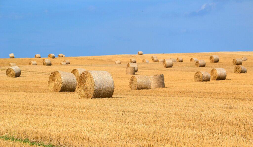 agricoltura e pandemia